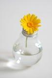 Fiore in una lampadina Fotografie Stock