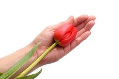 Fiore in una mano Fotografia Stock Libera da Diritti