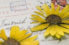 Fiore urgente sulla cartolina Fotografia Stock
