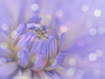 fiore vago Blu-rosa della dalia del fondo fiore sui precedenti vaghi Composizione floreale Priorità bassa floreale Immagine Stock Libera da Diritti