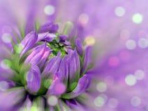 fiore vago Porpora-rosa della dalia del fondo fiore sui precedenti vaghi Composizione floreale Priorità bassa floreale Fotografia Stock Libera da Diritti