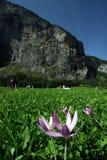 Fiore in valle. Fotografie Stock Libere da Diritti