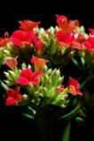 Fiore variopinto Fotografia Stock Libera da Diritti