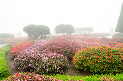 Fiore variopinto in bello giardino con la nebbia della pioggia Immagini Stock