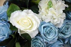 Fiore variopinto della rosa nella sala riunioni Fotografia Stock Libera da Diritti
