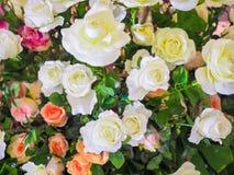 Fiore variopinto della rosa per il biglietto di S. Valentino Immagine Stock Libera da Diritti