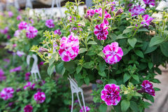 Fiore variopinto della sorgente Fotografie Stock