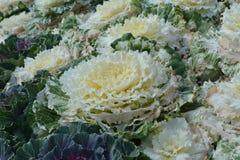Fiore variopinto Fiorisca in giardino al giorno soleggiato della primavera o dell'estate Fotografia Stock Libera da Diritti