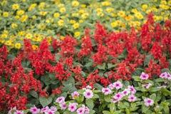 Fiore variopinto in giardino Immagini Stock Libere da Diritti