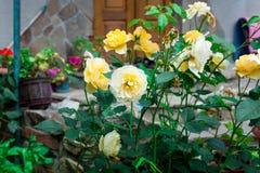 Fiore variopinto in giardino Fotografia Stock