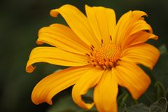 fiore variopinto nel Nord della Tailandia fotografia stock