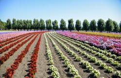 Fiore variopinto nella fila Immagini Stock
