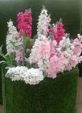 Fiore in vasi Immagini Stock