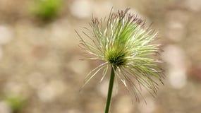 Fiore verde con i petali sottili immagine stock