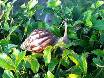 Fiore verde di mattina immagine stock