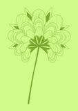 Fiore verde giapponese Immagini Stock