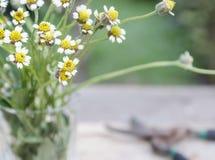 Fiore in vetro. Fondo vago Fotografia Stock