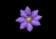 Fiore viola fotografie stock libere da diritti