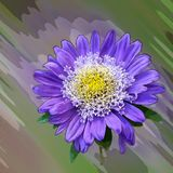 Fiore viola blu Immagini Stock Libere da Diritti