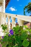 Fiore viola che scala una colonna bianca Fotografia Stock Libera da Diritti