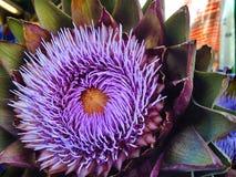 Fiore viola del carciofo Fotografia Stock