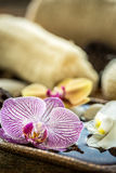Fiore viola dell'orchidea Immagine Stock