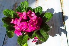 Fiore viola, piccolo fiore rosa sulla finestra fotografie stock