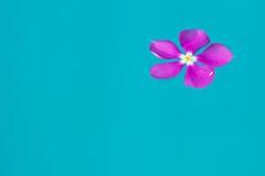 Fiore viola su acqua Fotografia Stock