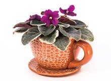 Fiore viola in vaso della ceramica Immagine Stock