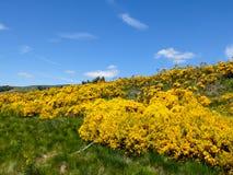 Fiorendo fiorisce nelle montagne di Cevennes, Francia immagine stock