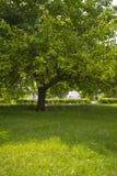 Fiorendo, inverdisca il prato con erba fertile Immagine Stock Libera da Diritti