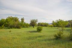 Fiorendo, inverdisca il prato con erba fertile Fotografia Stock