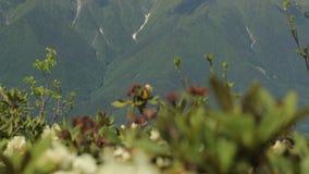 Fiorendo nelle montagne in primavera stock footage