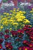 Fiorendo su un giardino ombreggiato Fotografia Stock