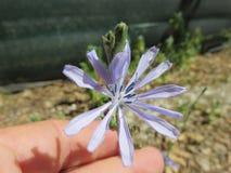 fiori Stockfotos
