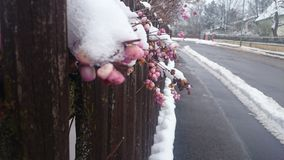 fiori Fotografie Stock