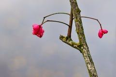 fiori Immagine Stock Libera da Diritti