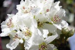 fiori Fotografia Stock Libera da Diritti