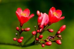 fiori Immagini Stock Libere da Diritti