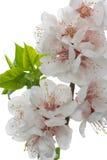 fiori Immagine Stock