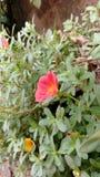 fiori Fotografia Stock