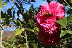 Fiori abbastanza rosa alla luce solare di giorno fotografia stock
