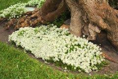 Fiori ad un tronco di albero Immagini Stock Libere da Diritti