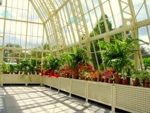 Fiori ai giardini botanici nazionali Fotografia Stock Libera da Diritti