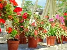 Fiori ai giardini botanici nazionali Immagini Stock Libere da Diritti