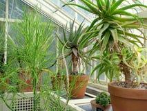 Fiori ai giardini botanici nazionali di Dublino Immagine Stock