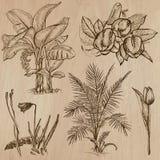 Fiori, alberi, piante - pacchetto disegnato a mano di vettore Fotografia Stock