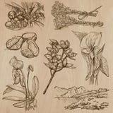 Fiori, alberi, piante - pacchetto disegnato a mano di vettore Immagine Stock Libera da Diritti