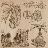 Fiori, alberi, piante - pacchetto disegnato a mano di vettore Fotografie Stock Libere da Diritti