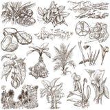 Fiori, alberi, piante - un pacchetto disegnato a mano originali Fotografie Stock